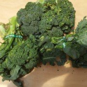 Fresh, organic broccoli