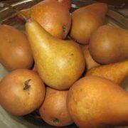 Pears-Bosc
