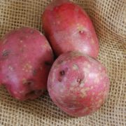 The red potatoes available this week will last for several months when stored int eh fridge.