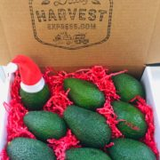 Organic Avocado Gift Basket