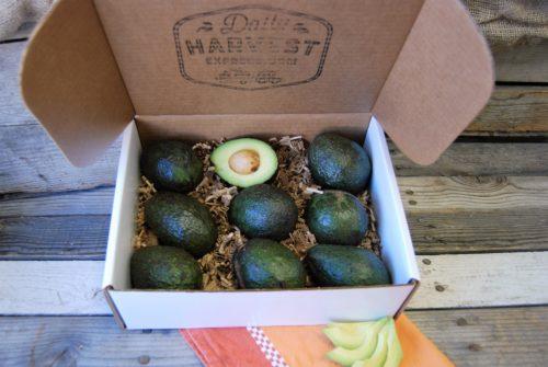 avocado gift box
