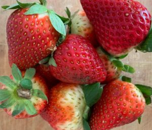 The story of San Diego's first local organic strawberries of the season